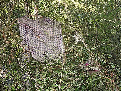 Clothesline in the bush