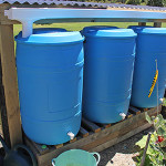 Three 200 liter barrels waiting for rain.
